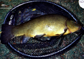 Gary Shaves: 12lb 2oz Tench from the Main Lake